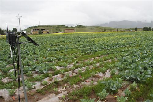 农业种植基地无线智能监测系统用哪种无线网桥好?