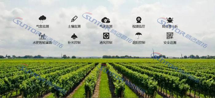 智慧农业现场图